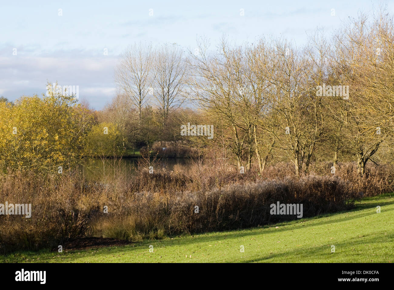 Lake in an English park in late Autumn. - Stock Image