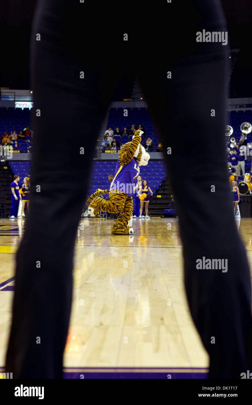 Jan. 27, 2011 - Baton Rouge, Louisiana, U.S - 27 January 2011- Arkansas at LSU; Mike the Tiger interacts with the Stock Photo