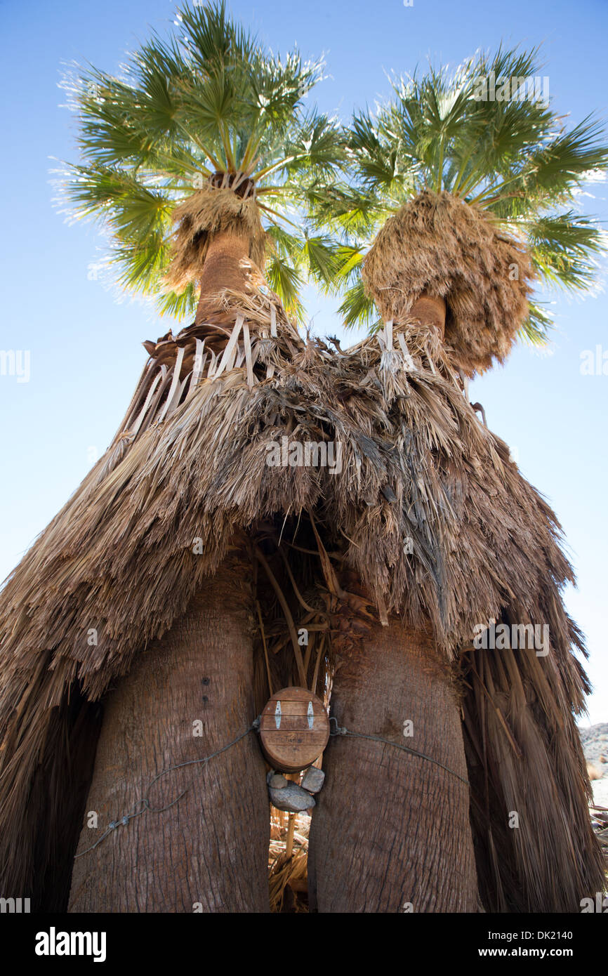 A barrel wedged into palm trees serves as an informal desert mailbox at 17 Palms Oasis, Anza Borrego Desert State Park, San Dieg - Stock Image