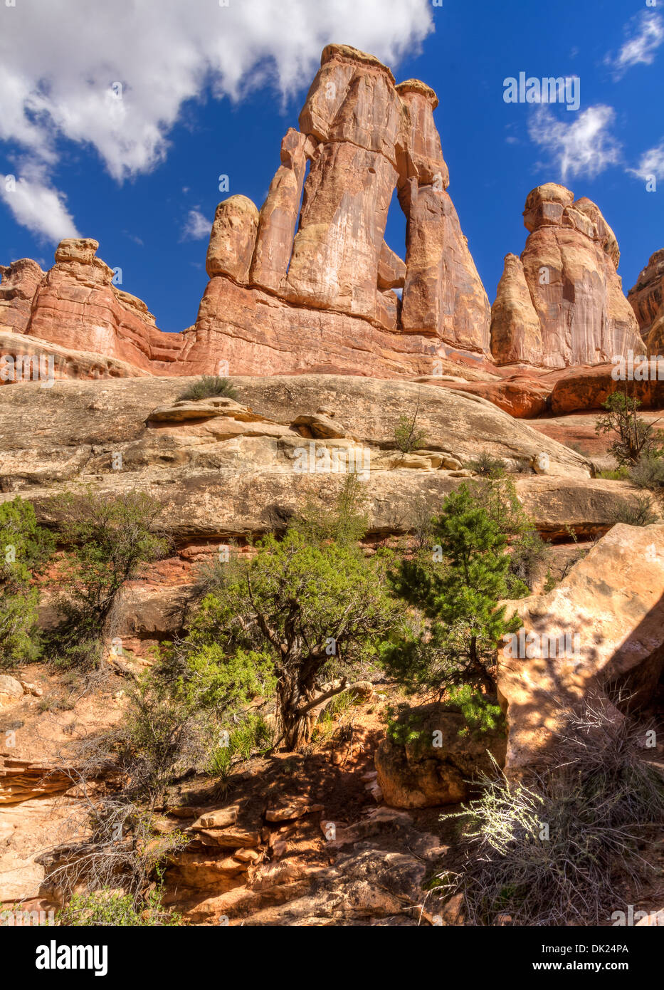 Iconic Druid Arch with juniper bushes in Elephant Canyon in the Needles District of Canyonlands National Park, Utah - Stock Image