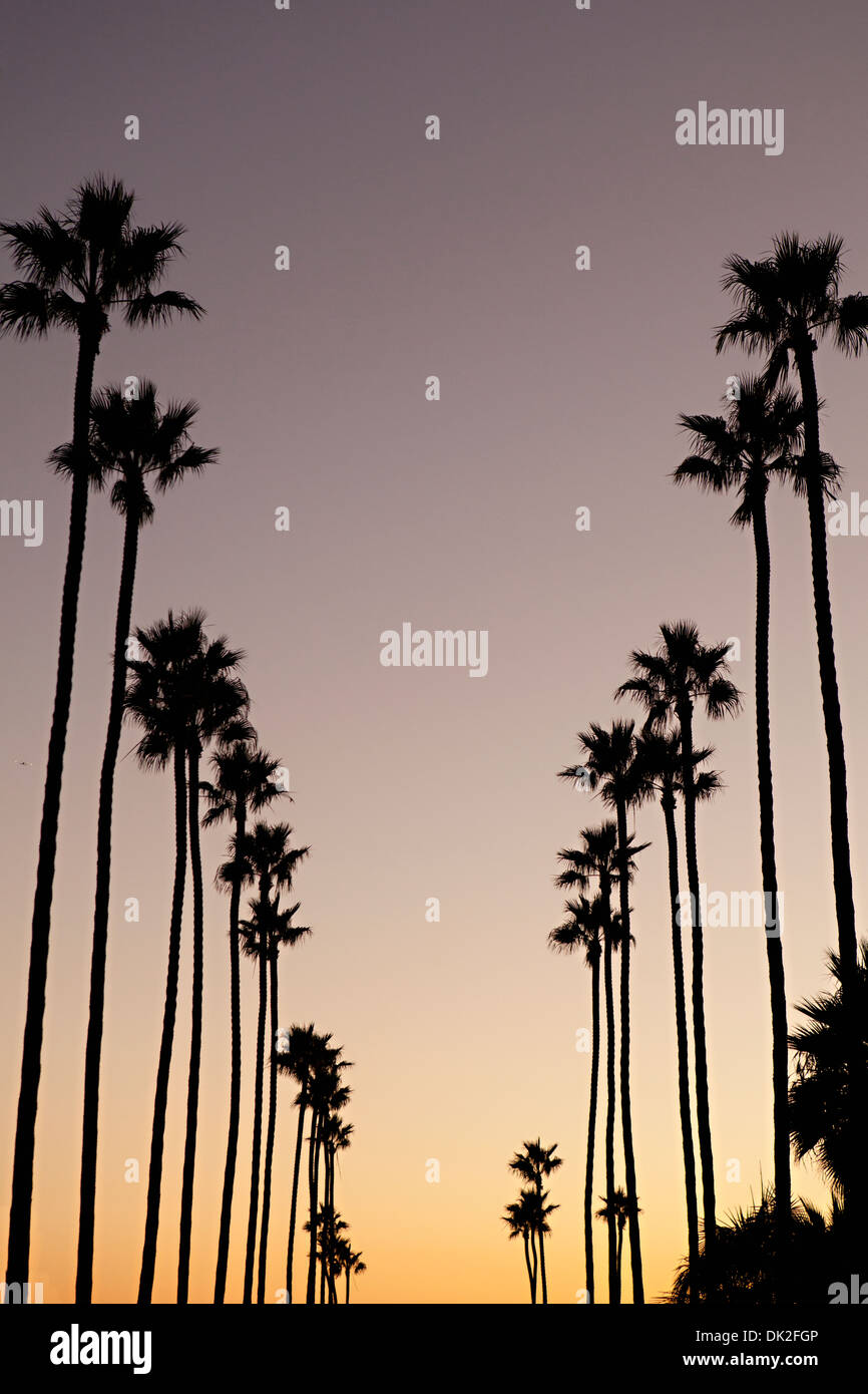 Low angle view of tall silhouetted palm trees against sunset sky, Corona del Mar, California, United States - Stock Image