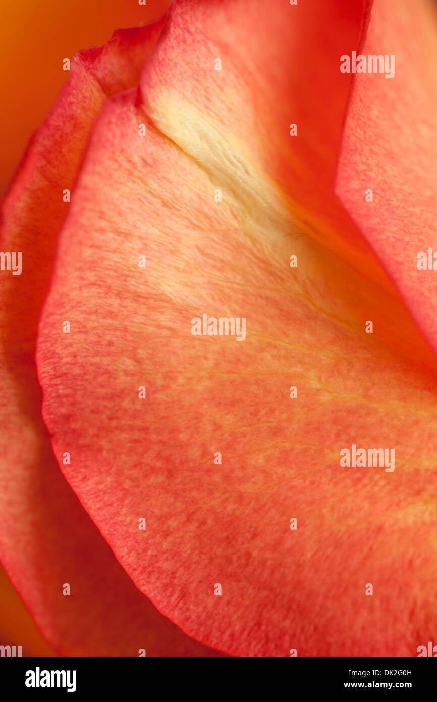 Close up high angle view full frame detail of orange flower petals - Stock Image