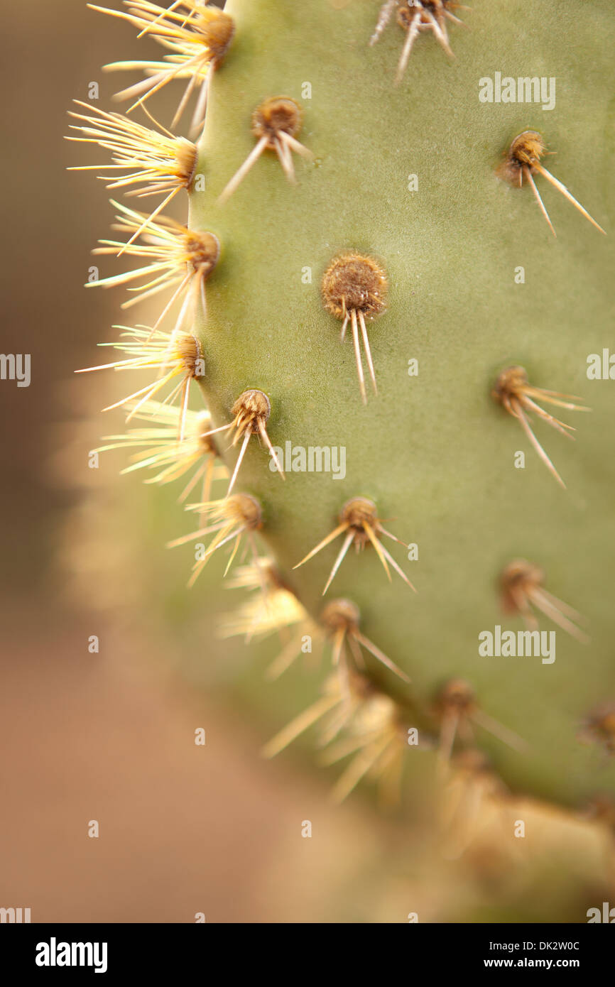 Close up detail of thorns on spiky green cactus - Stock Image
