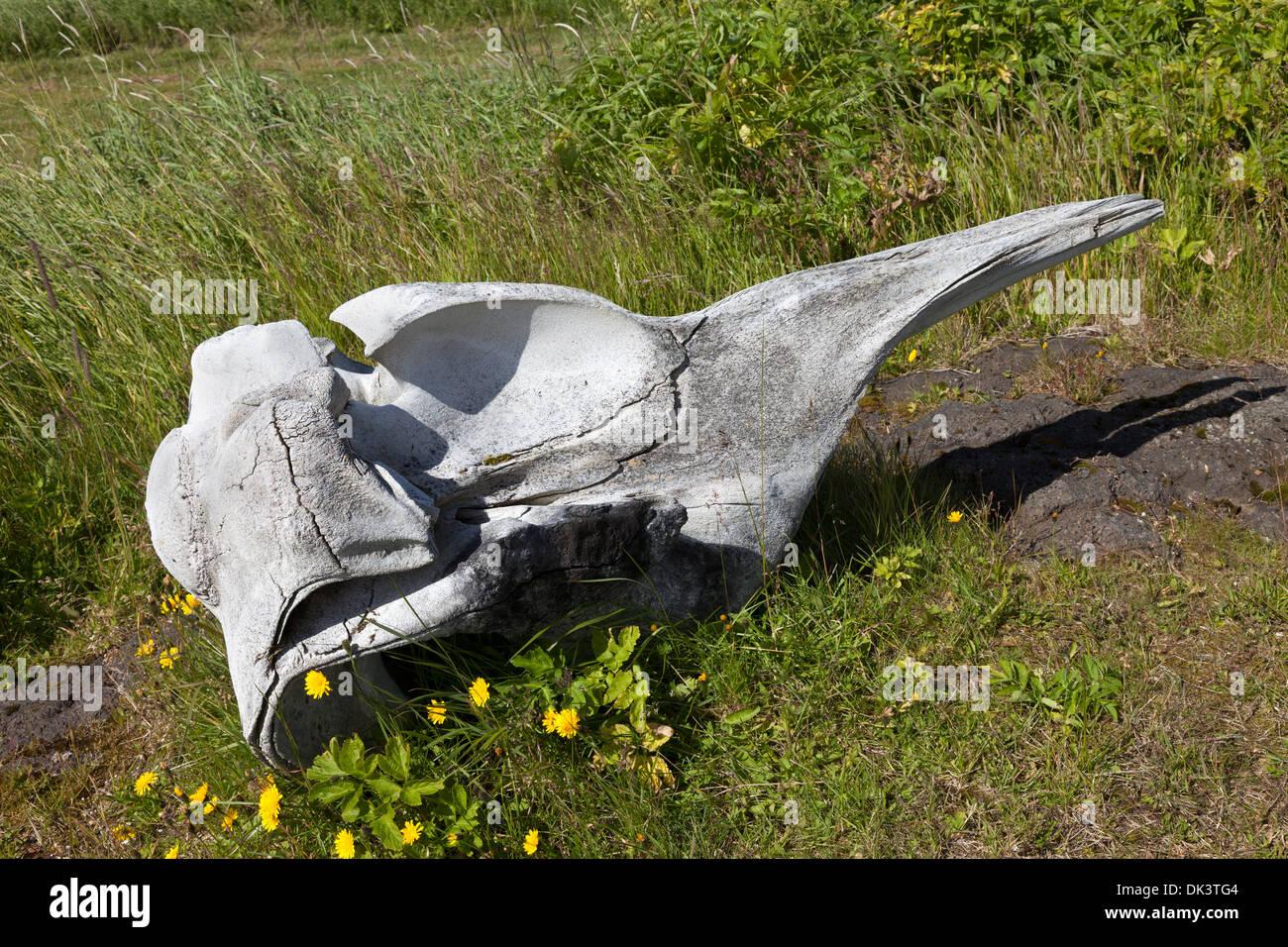 Whale Bone on the Reykjanes Peninsula Iceland - Stock Image