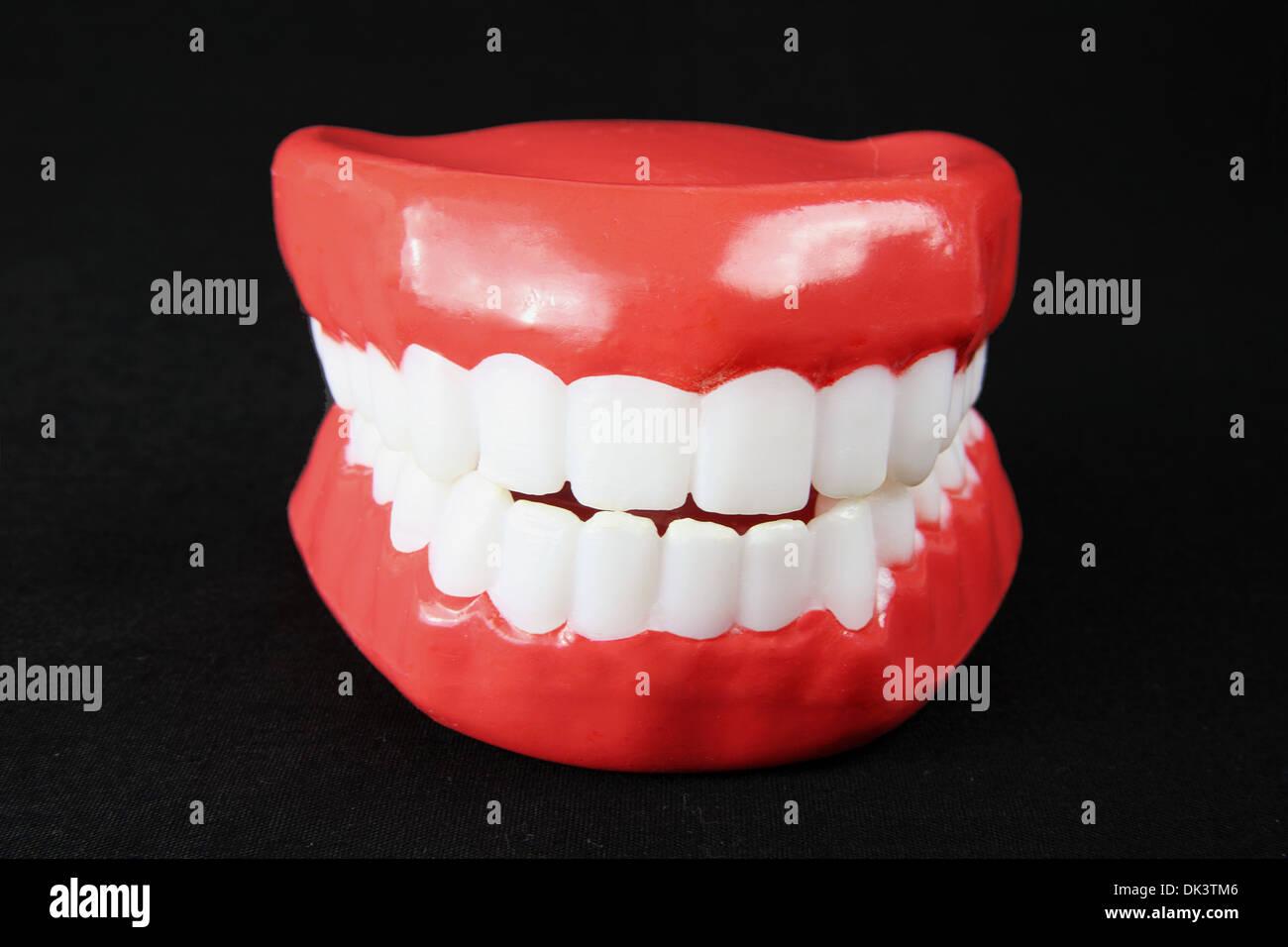 Denture Model - Stock Image