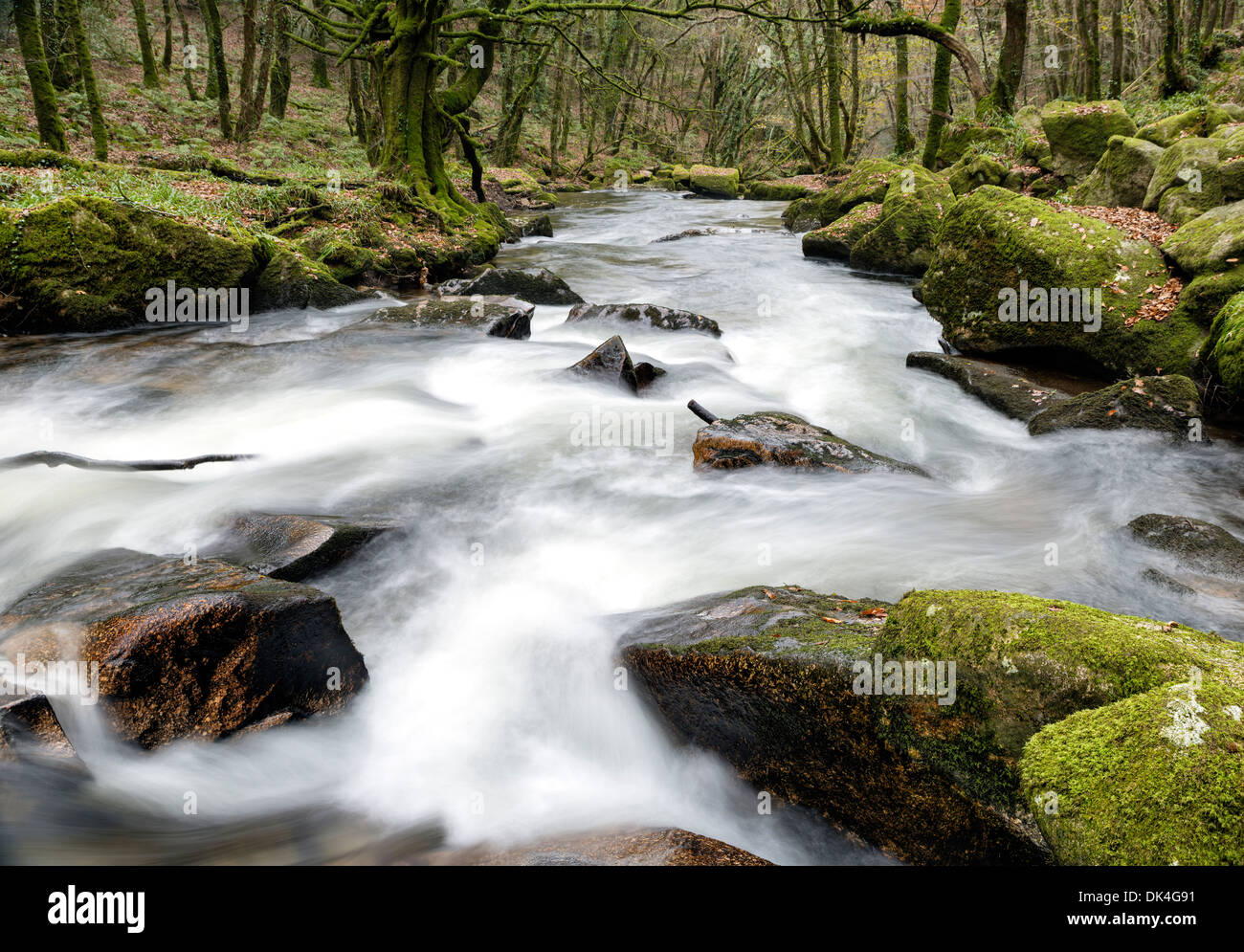 Water cascading through ancient woodland at Golitha Falls on the edge of Bodmin Moor in Cornwall - Stock Image