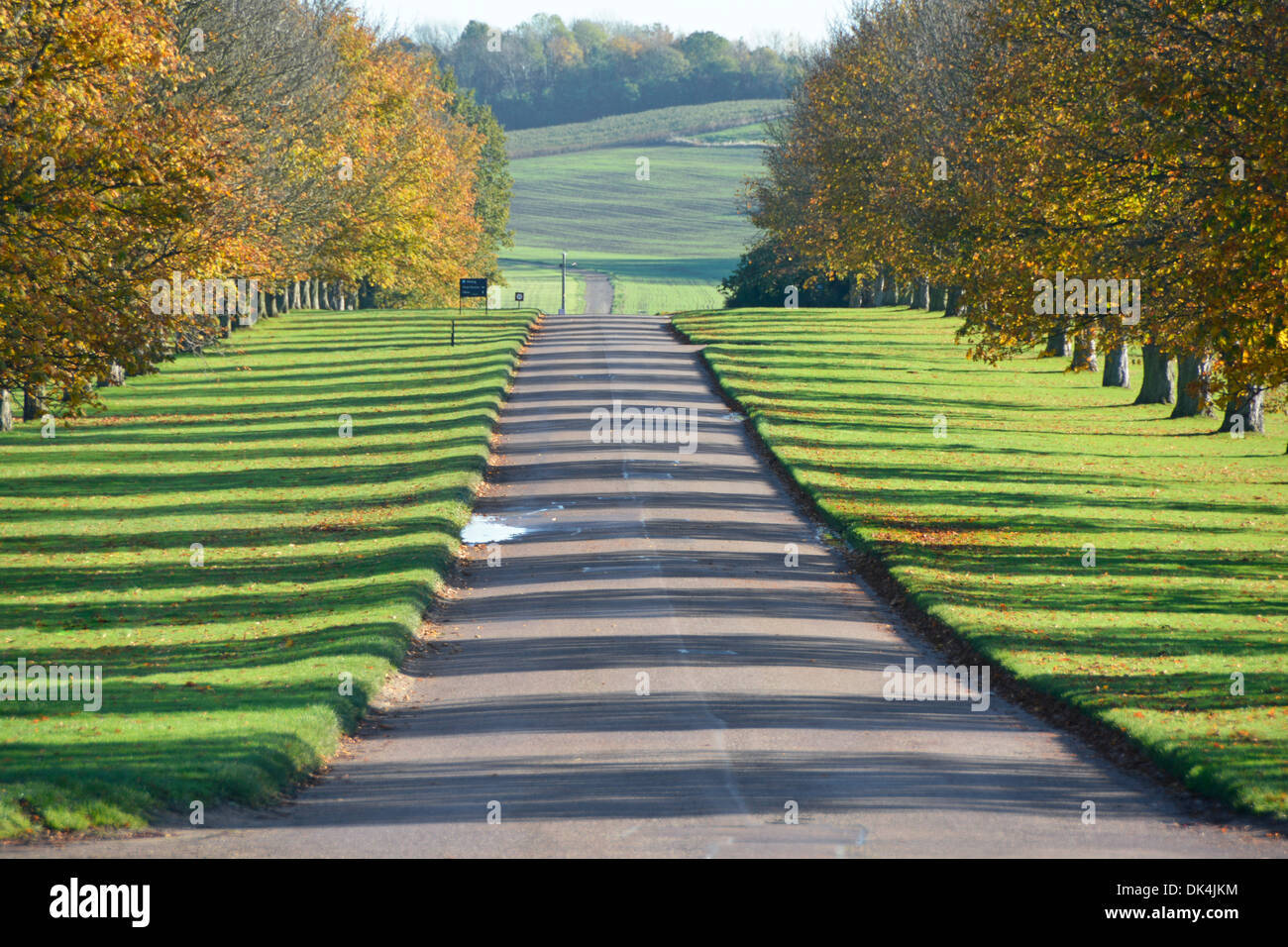 Avenue of autumn trees casting shadows across each side of long driveway in country park Stock Photo