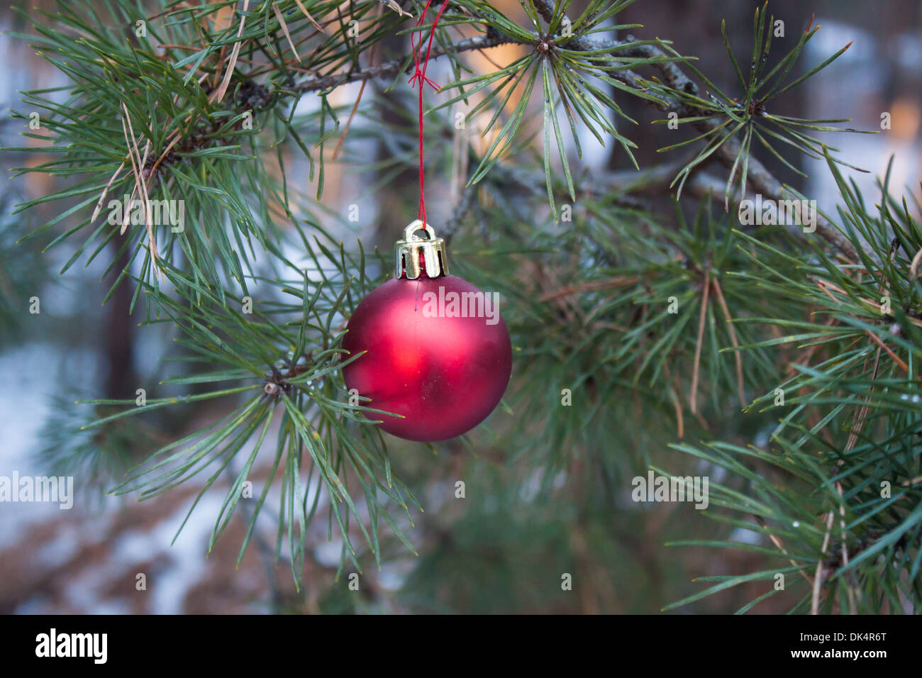 red Christmas ornament pine tree branch 'fir tree branch' red green - Stock Image