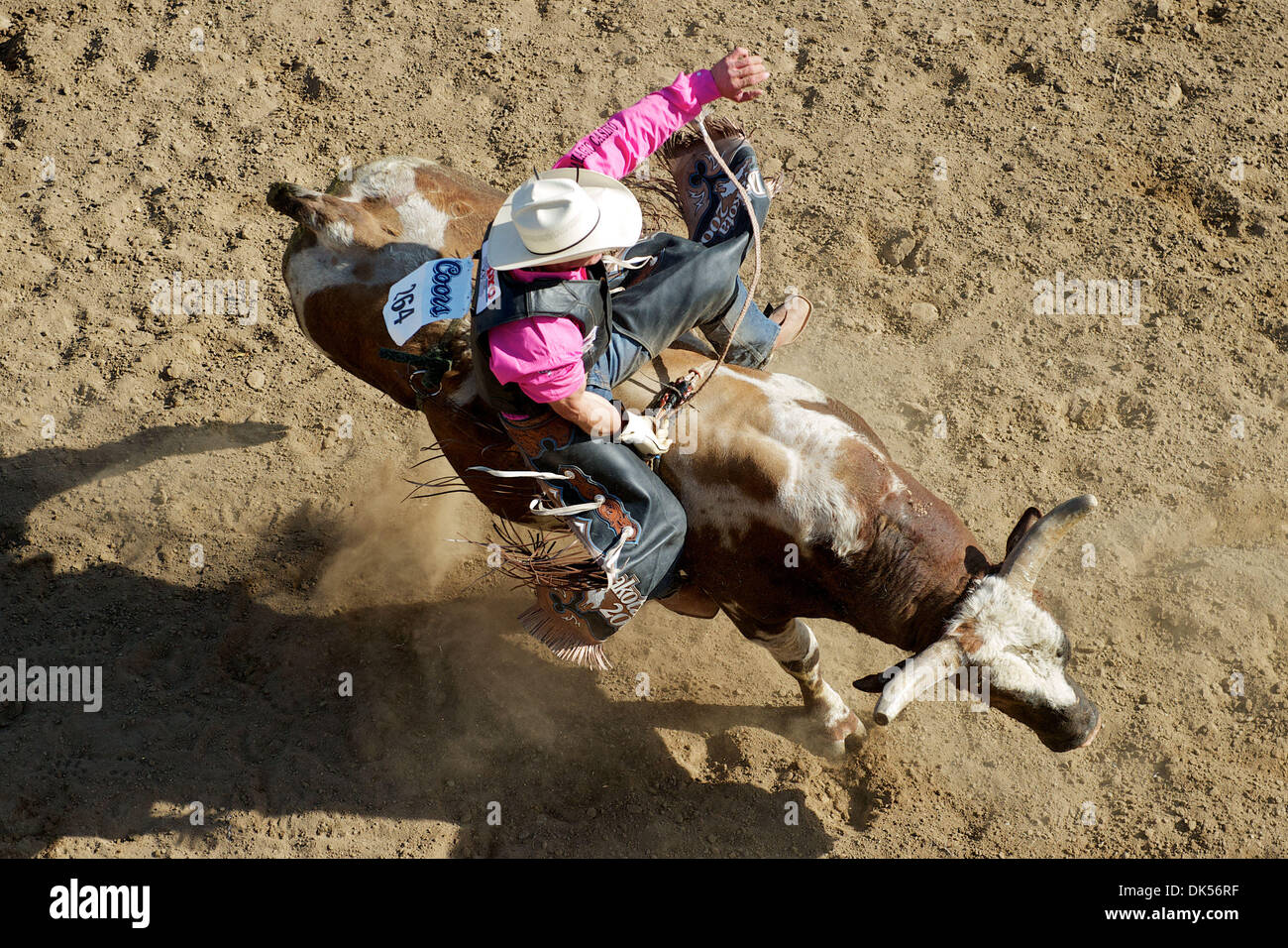 Apr. 24, 2011 - Clovis, California, U.S - Ardie Maier of Timber Lake, SD rides Mean One at the Clovis Rodeo. (Credit Image: © Matt Cohen/Southcreek Global/ZUMAPRESS.com) - Stock Image