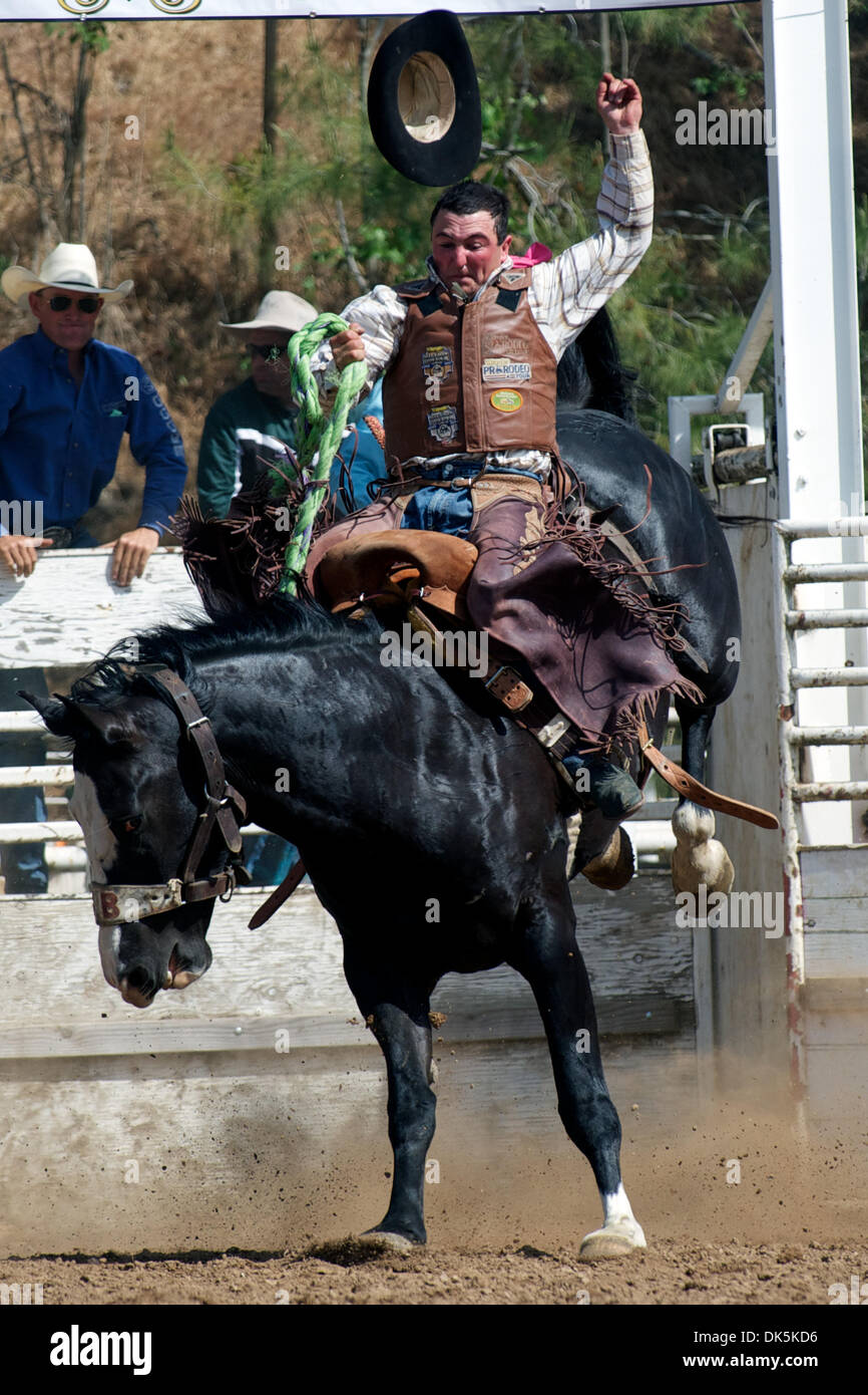 May 7, 2011 - Sonora, California, U.S - Joe Heguy of Elko, NV rides Scareface at the Mother Lode Round-Up in Sonora, CA. (Credit Image: © Matt Cohen/Southcreek Global/ZUMAPRESS.com) - Stock Image