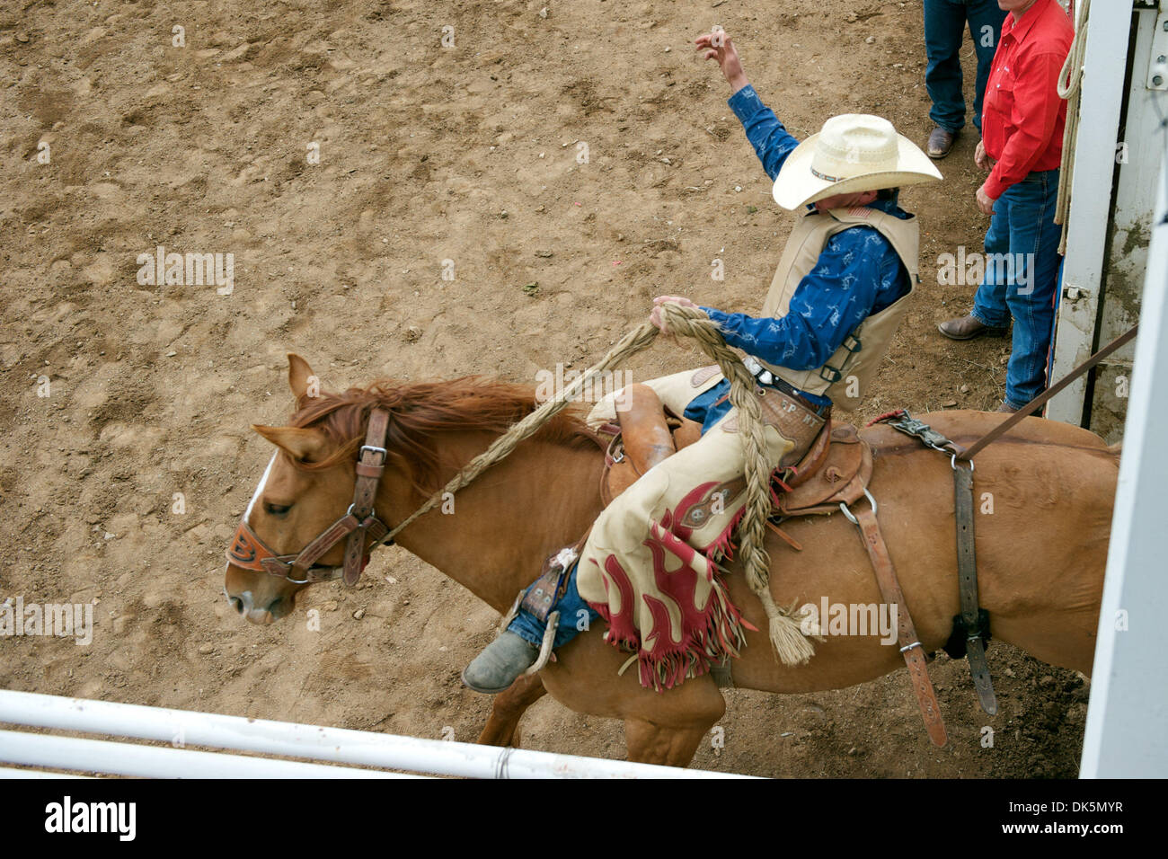 May 8, 2011 - Sonora, California, U.S - Robby Hacker of Battle Mountain, NV rides Excessive Force out of the chute at the Mother Lode Round-Up in Sonora, CA. (Credit Image: © Matt Cohen/Southcreek Global/ZUMAPRESS.com) - Stock Image