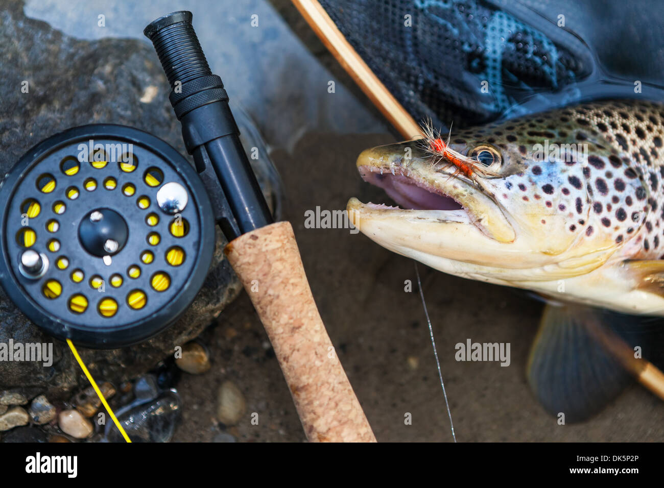 A fly fisherman's freshly caught brown trout, shallow depth of field, focus on the fish. Stock Photo