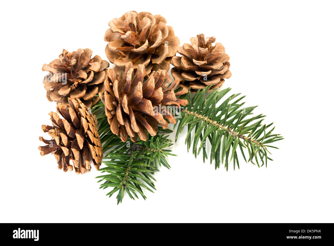 Pine cones with branch on a white background - Stock Image