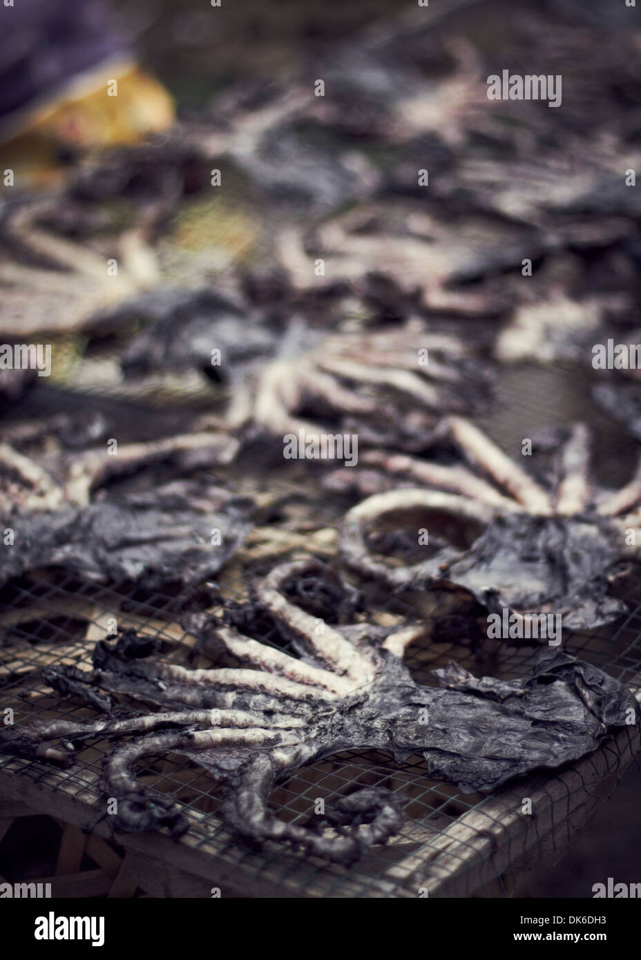 drying octopi on a rack in bali - Stock Image