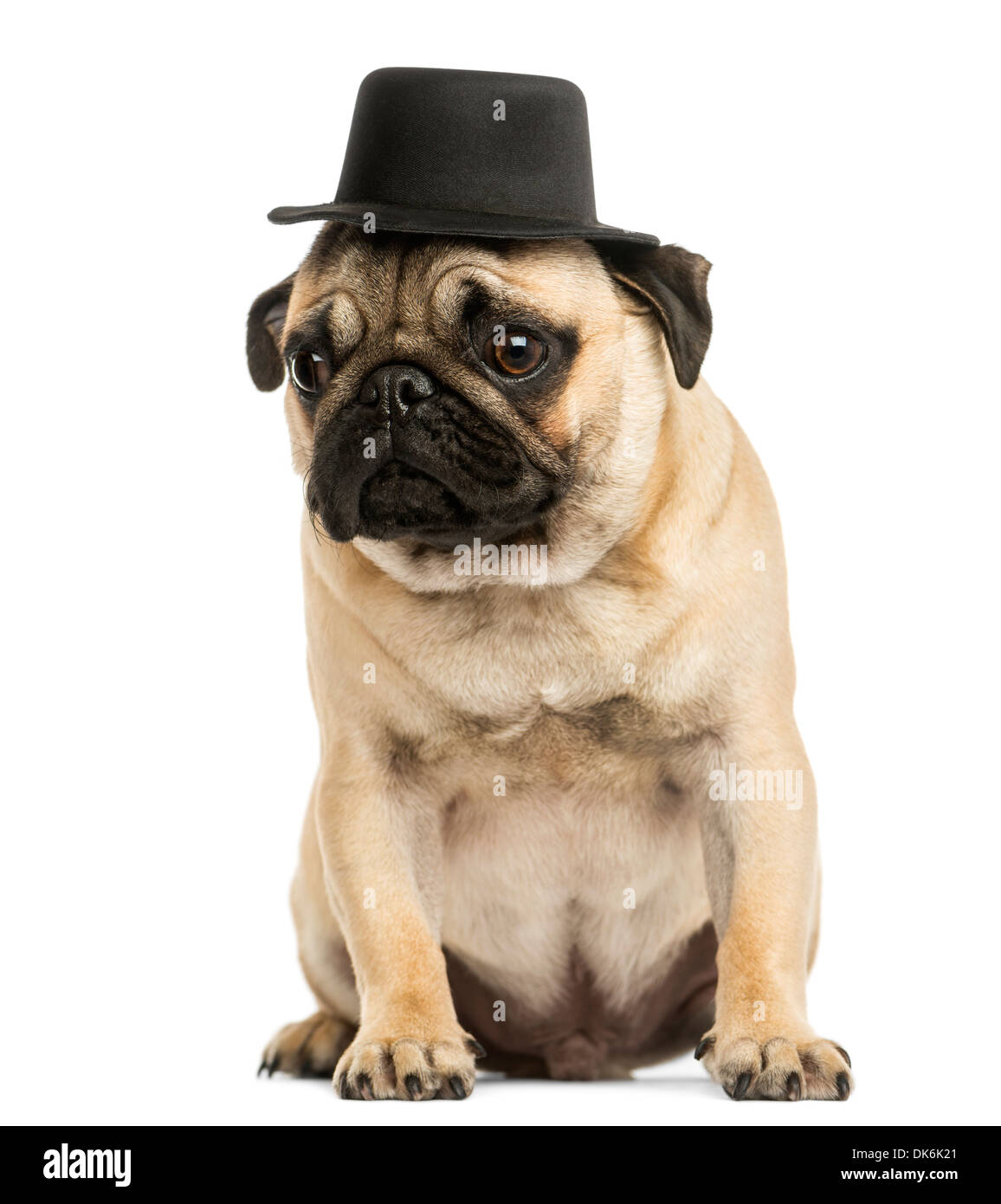 Front view of a Pug puppy wearing a top hat, sitting, 6 months old, against white background - Stock Image