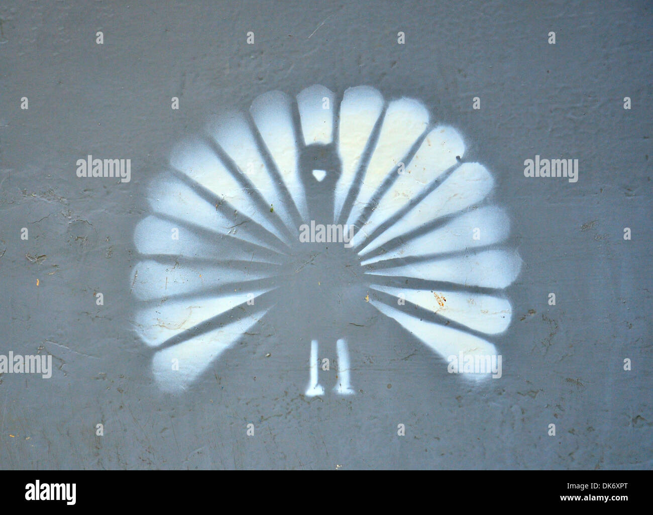 White Spray paint of peacock on gray background - Stock Image