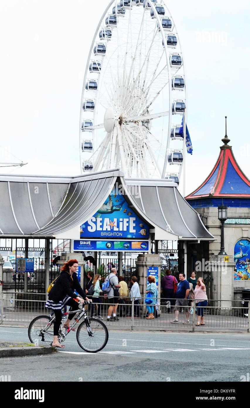Brighton Sealife centre, UK - Stock Image