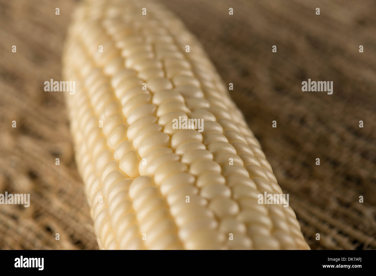 Close up image of yellow corn on the cob - Stock Image
