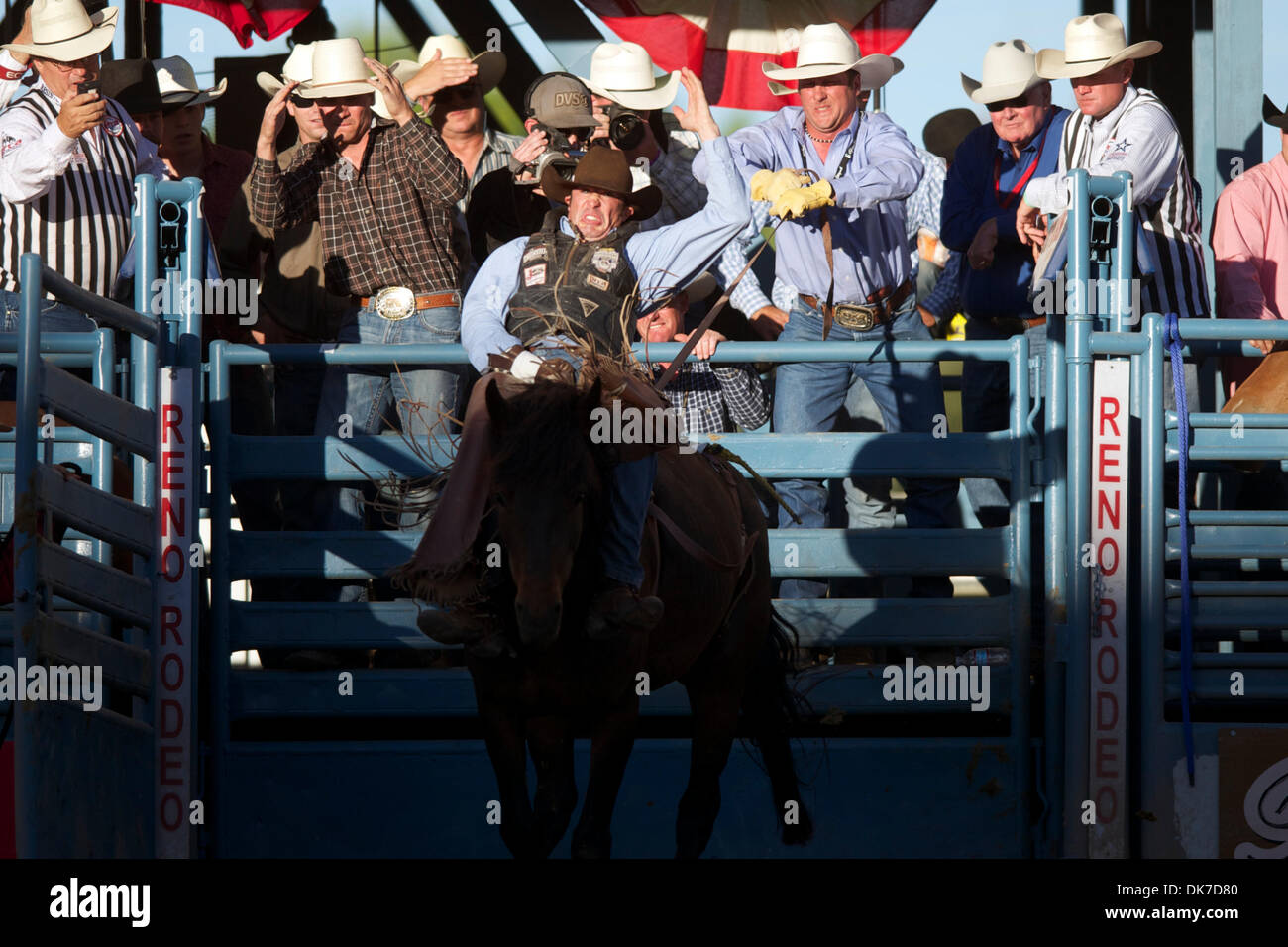 June 20, 2011 - Reno, Nevada, U.S - George Gillespie IV of Placerville, CA rides Commotion Toddy at the Reno Rodeo. (Credit Image: © Matt Cohen/Southcreek Global/ZUMAPRESS.com) - Stock Image