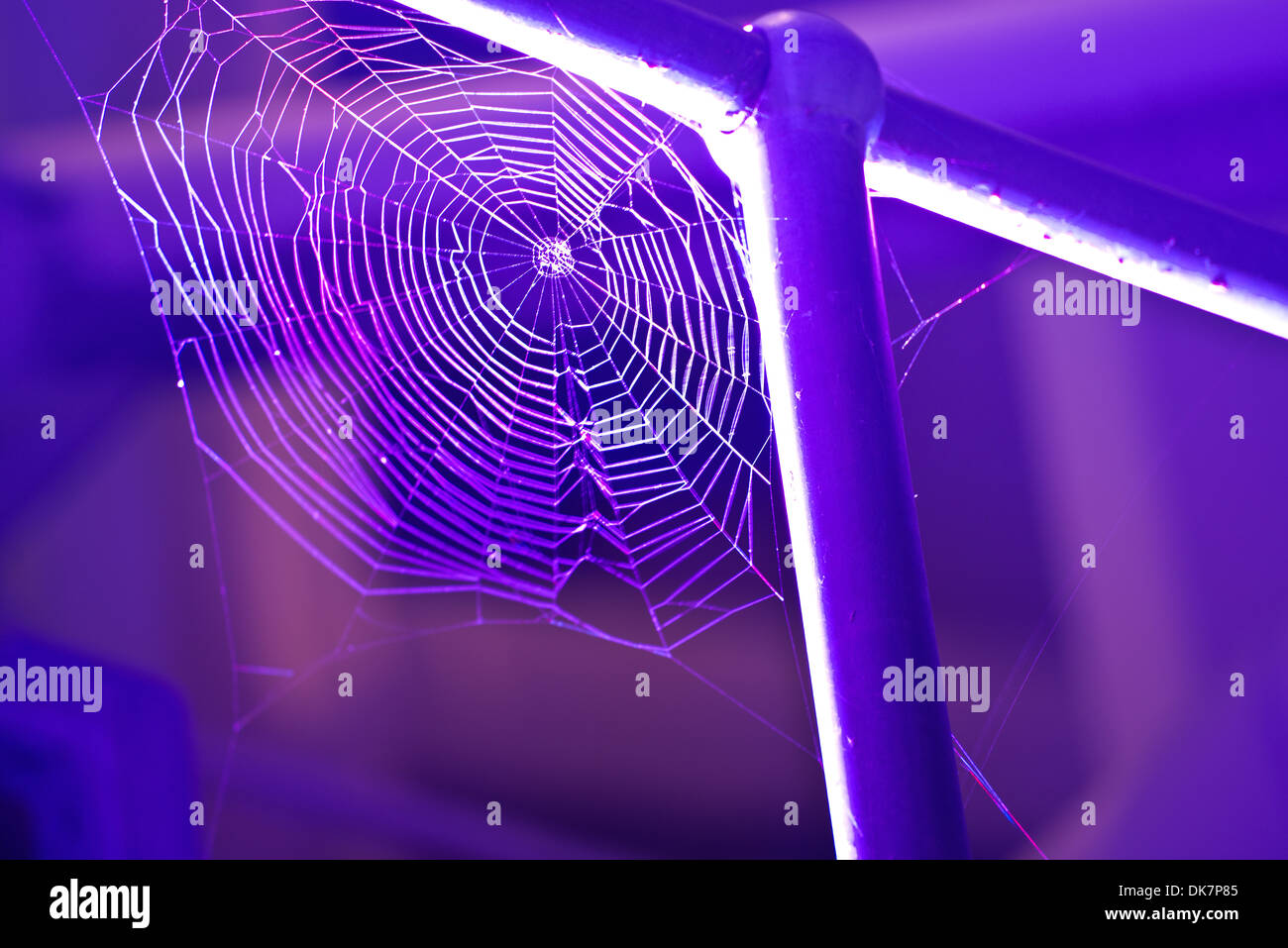 Spider web attached to white railing and lit by purple light - Stock Image