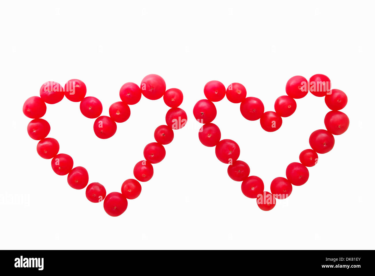 Valentine card concept. Red yew fruits forming two hearts, isolated on white background. - Stock Image