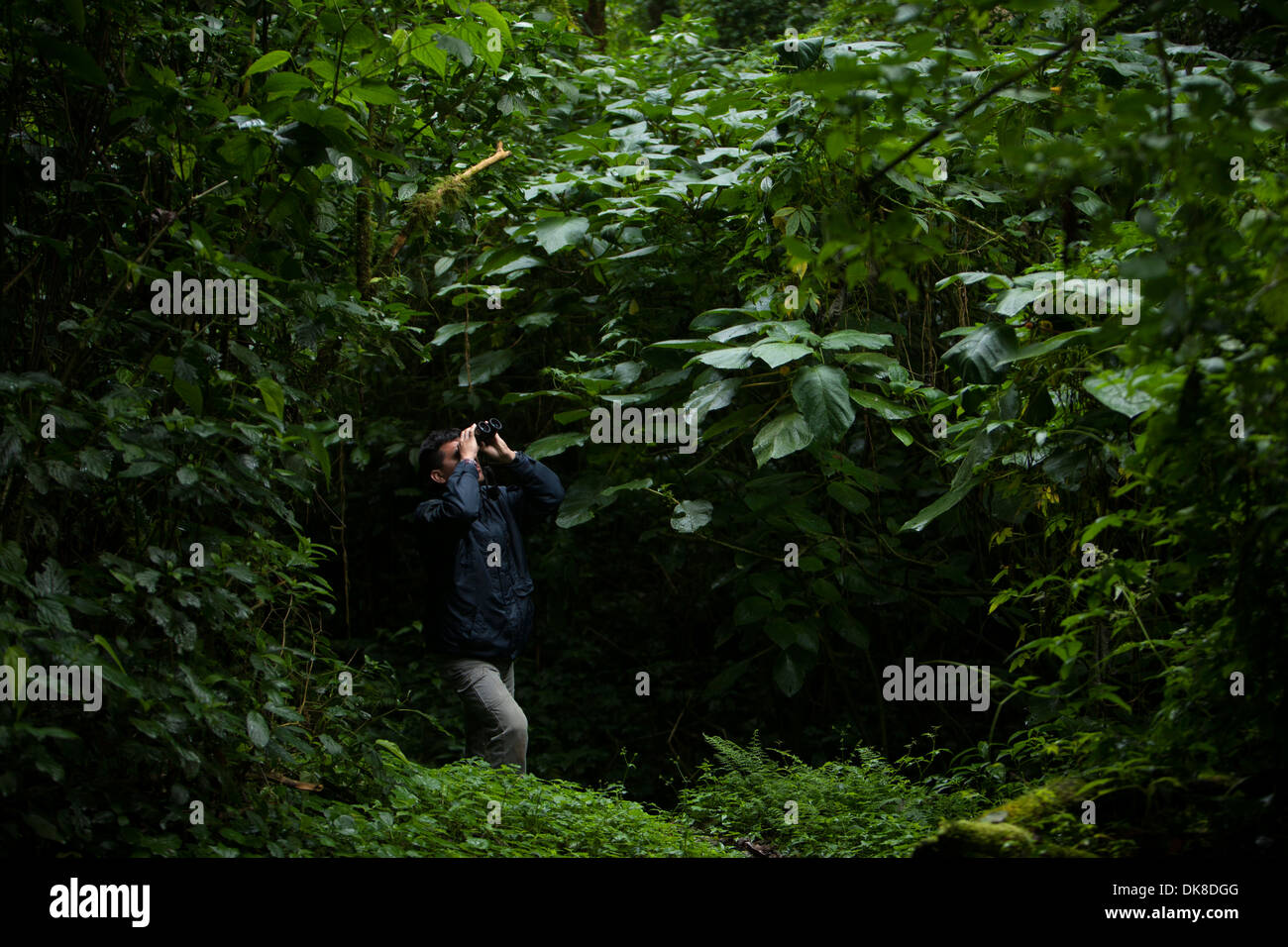 A biologist in a trail in the forest in El Triunfo Biosphere Reserve in the Sierra Madre mountains, Chiapas State, Mexico. - Stock Image