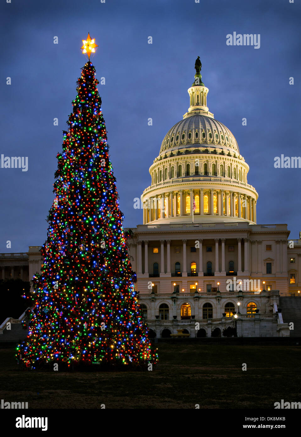 Capitol Christmas Tree.The Us Capitol Christmas Tree Shines In Front Of The Capitol