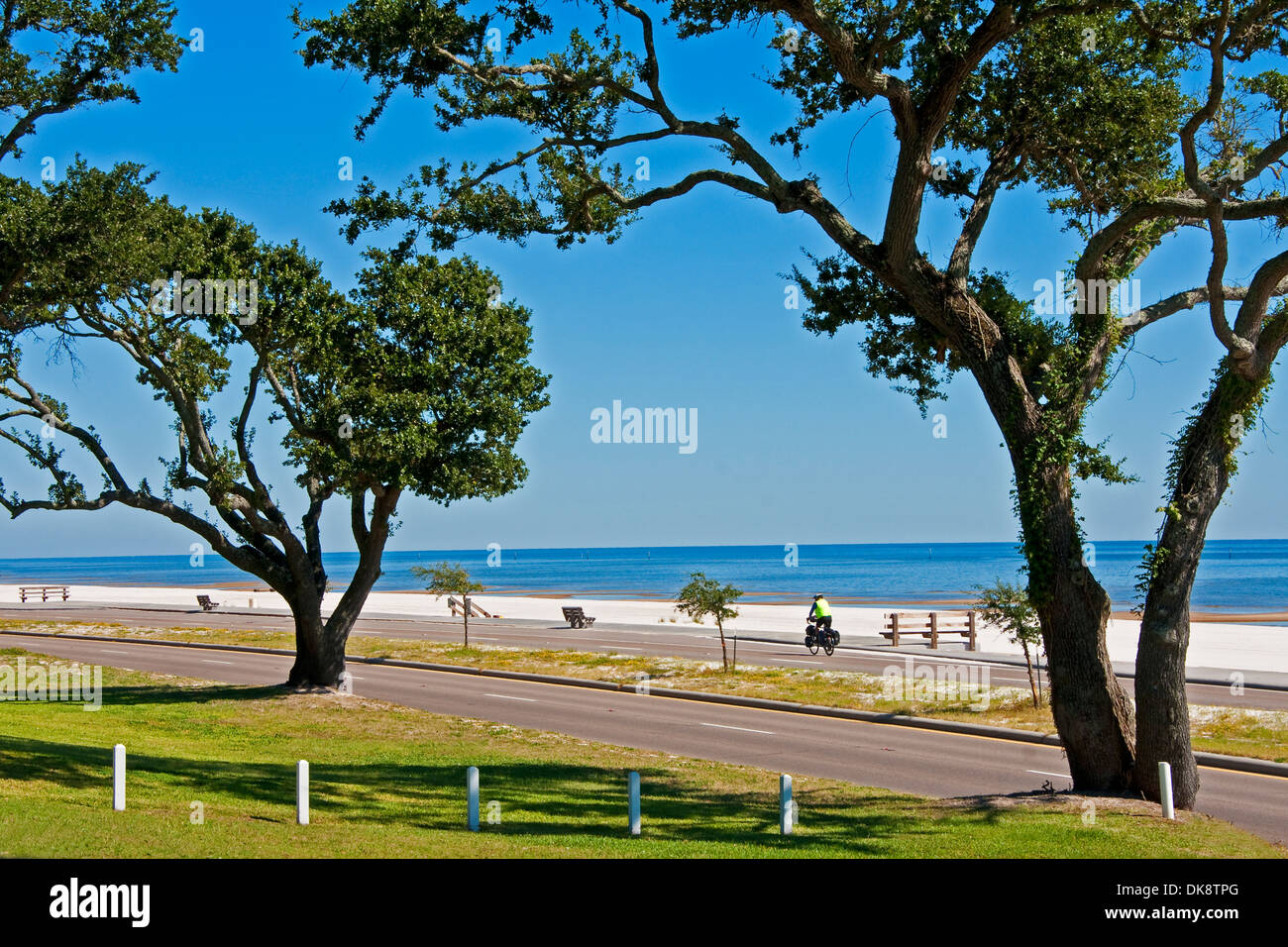 Oak trees along shore of Mississippi Sound on Gulf Coast near Pass Christian, Mississippi. - Stock Image