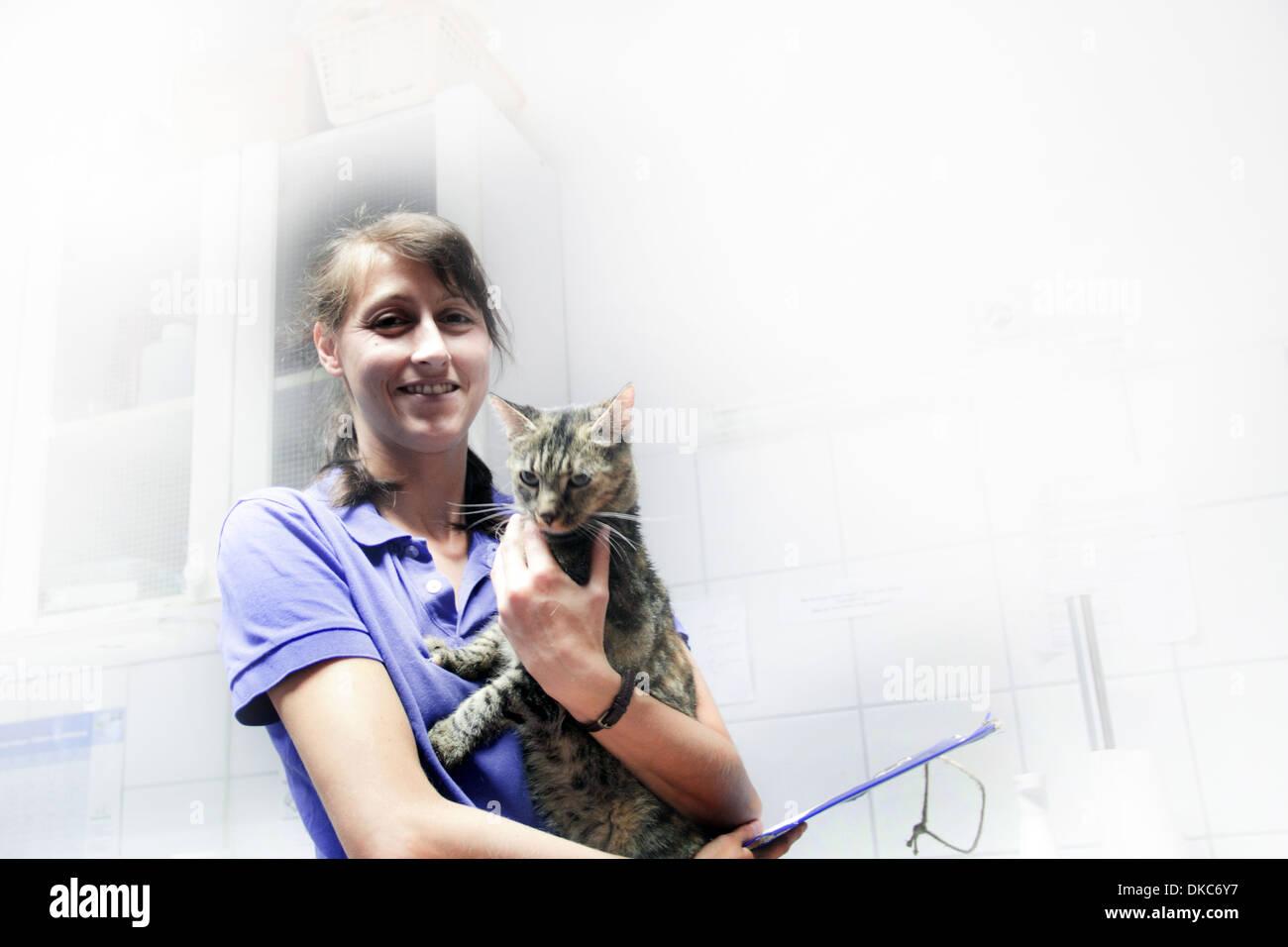Vet holding domestic cat - Stock Image