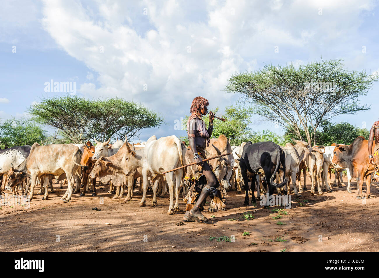Women dancing around the cattle during a bull jumping ceremony. A rite of passage from boys to men. Hamer tribe, Omo valley, Ethiopia - Stock Image