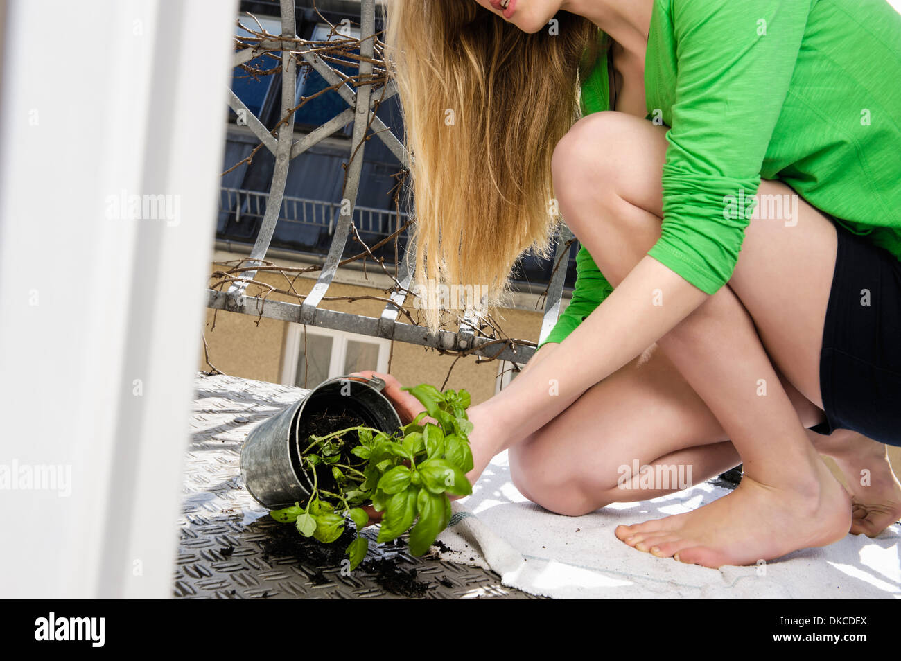 Teenage girl cleaning up pot plant on floor - Stock Image