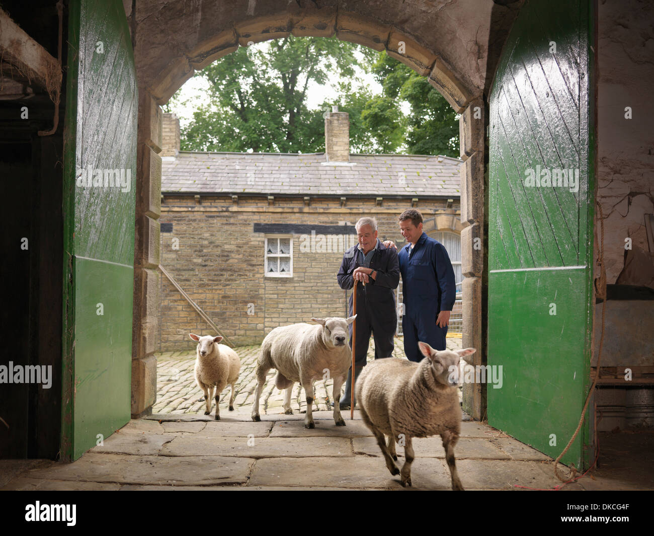Farmer and son watching sheep enter old barn - Stock Image