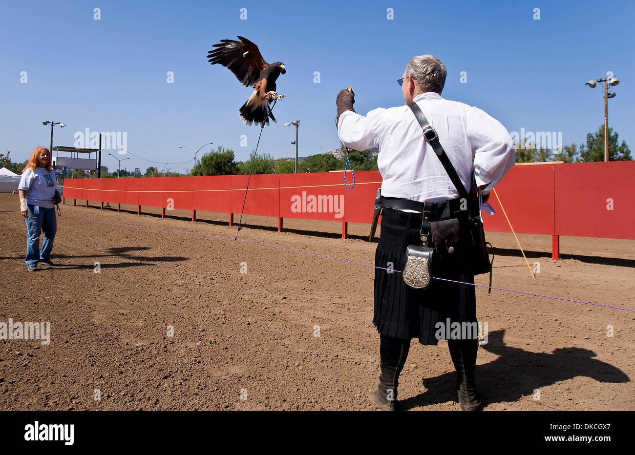 Oct. 21, 2011 - Poway, California, USA -  A falcon flies to the arm of trainer Rick Holderman during a demonstration Stock Photo