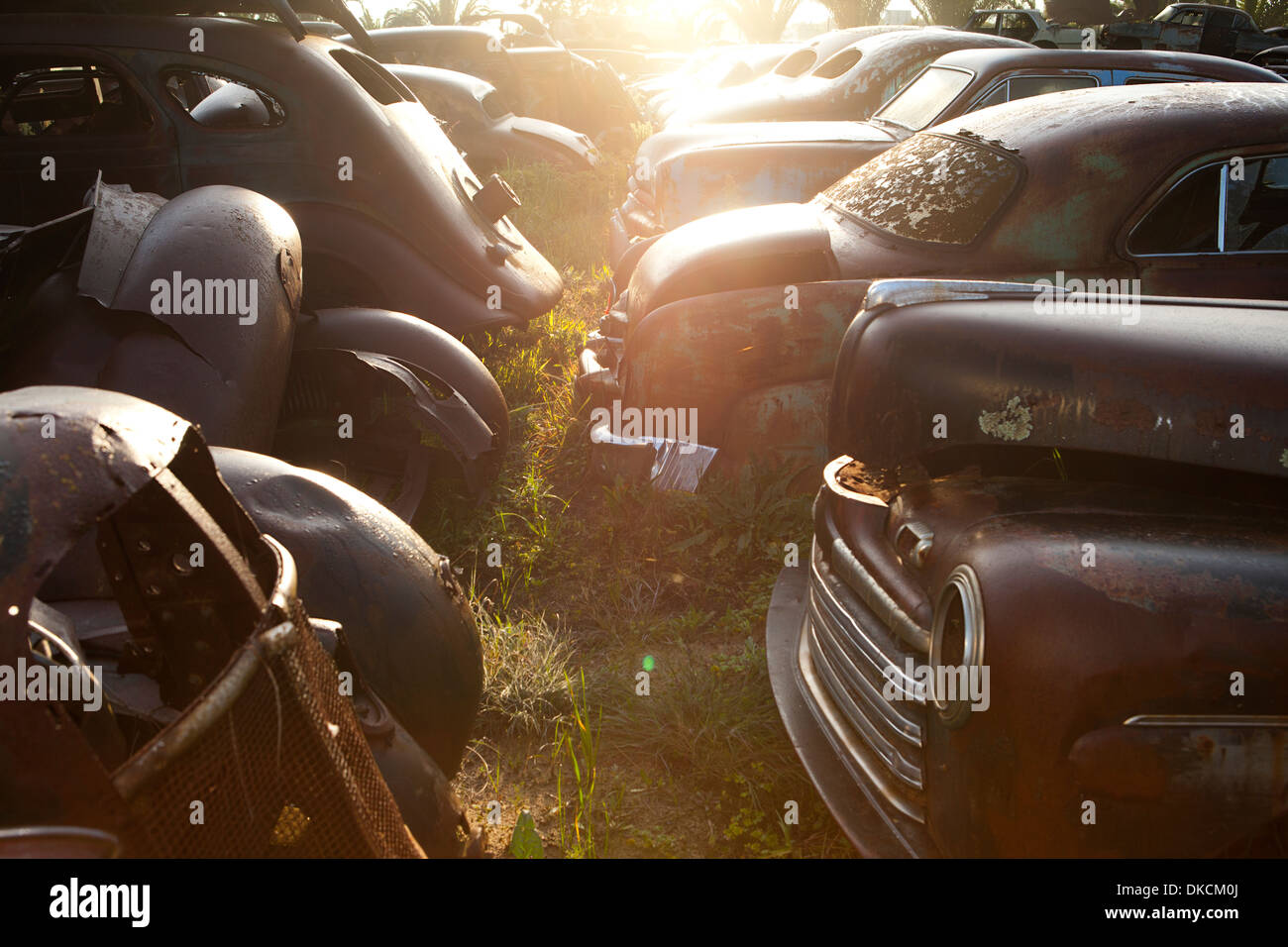 Vintage cars abandoned in scrap yard - Stock Image
