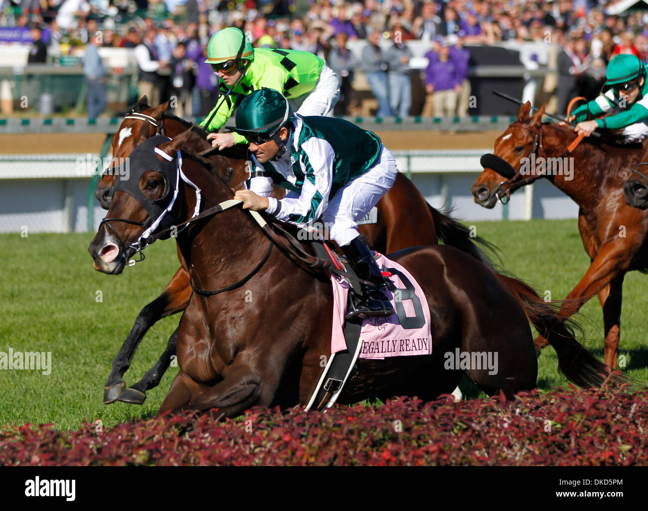 Nov. 5, 2011 - Louisville, KY, USA - Regally Ready,8, with Corey Nakatani up won the Turf Sprint Division during Stock Photo