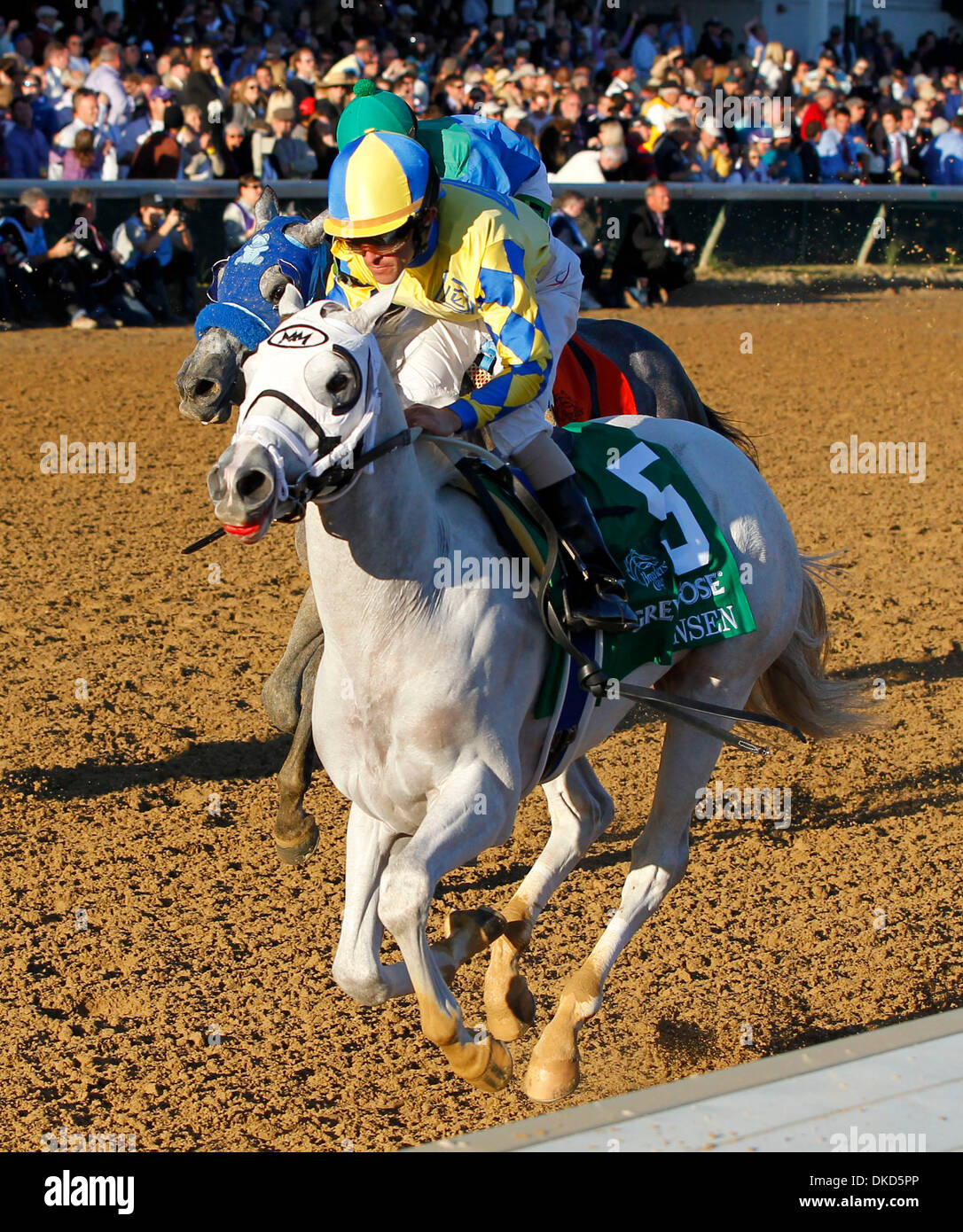 Nov. 5, 2011 - Louisville, KY, USA - Hansen, 5, with Ramon Dominguez  up won the Breeders juvenile  during the 2011 Stock Photo