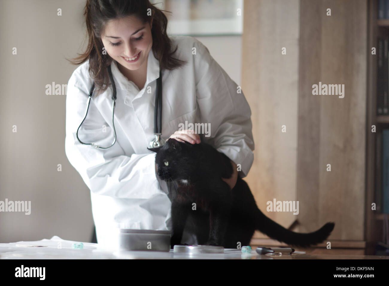 Veterinarian examining black cat - Stock Image
