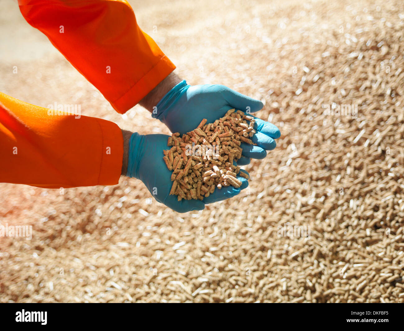 Worker holding handful of wood pellets, close up - Stock Image