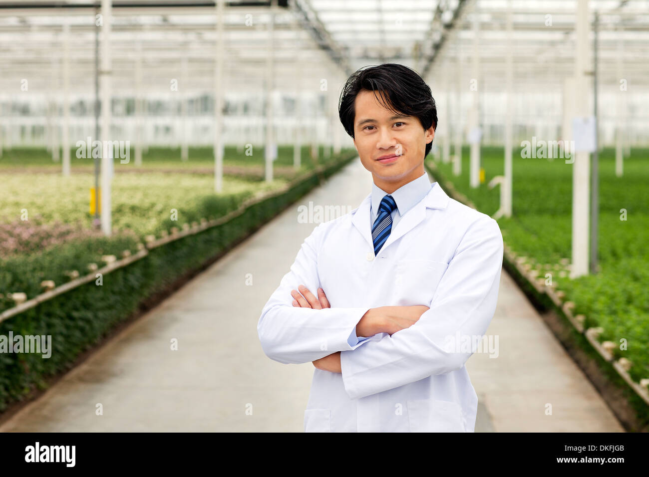 Scientist standing in front of rows of plants growing in greenhouse, arms folded Stock Photo