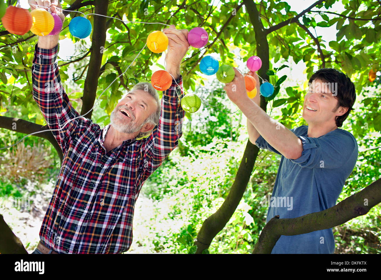 Father and adult son putting fairy lights in tree Stock Photo