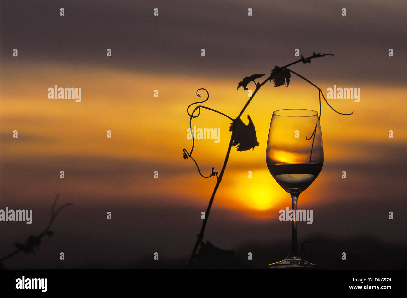 Wine glass and vine branch at sunset - Stock Image