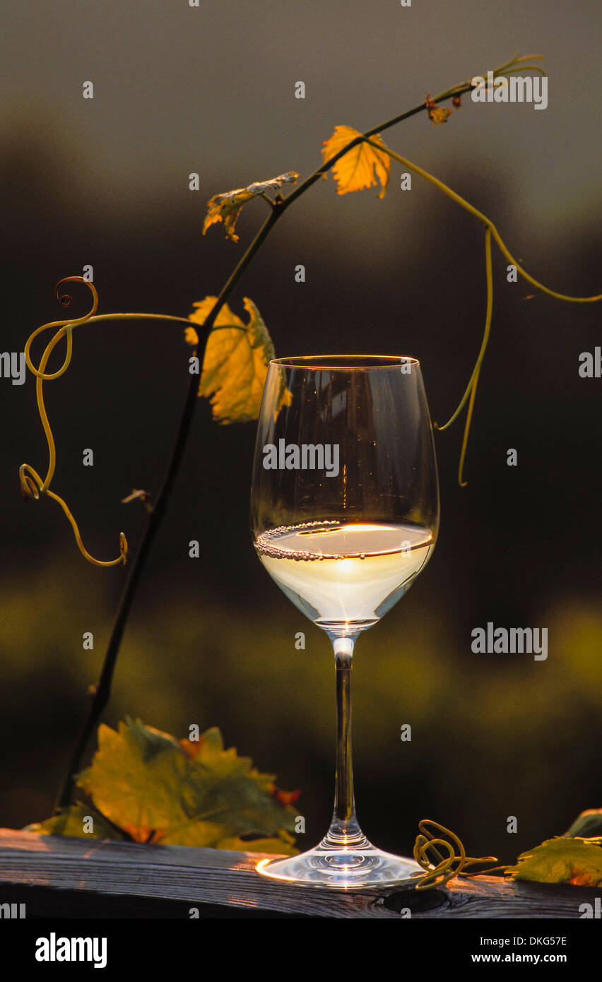 Wine glass and vine branch - Stock Image