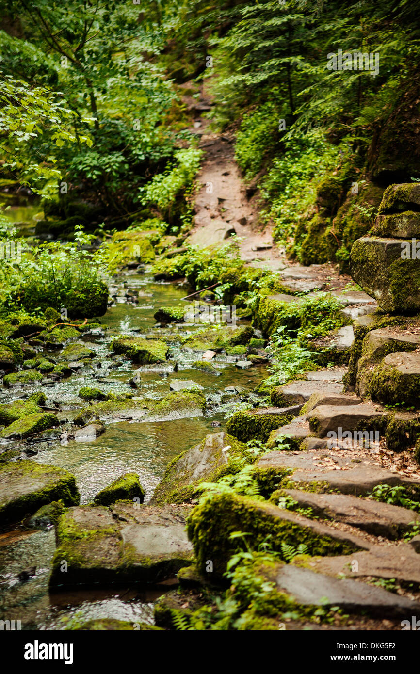 Monbachtal, Black Forest, Baden-Wuerttemberg, Germany, Europe - Stock Image