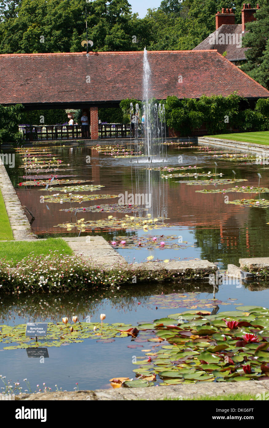 Waterlily Pond, Royal Horticultural Gardens Wisley, Woking, Surrey. - Stock Image