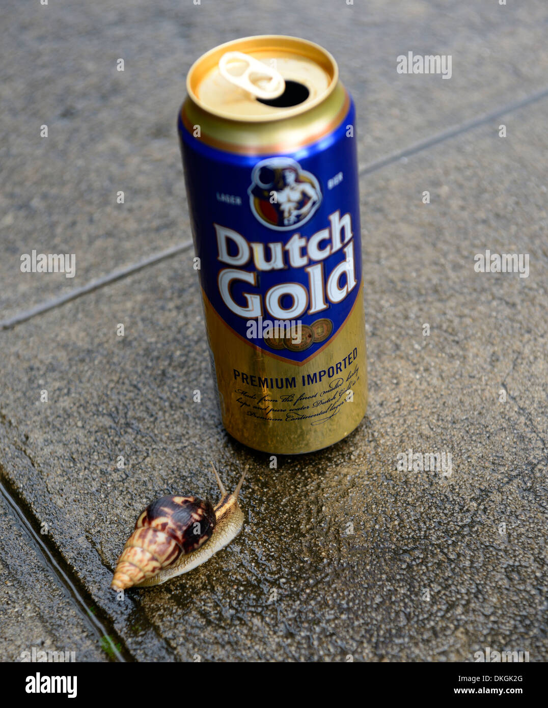 snail glide gliding towards alcohol can dutch gold cheap low cost beer - Stock Image