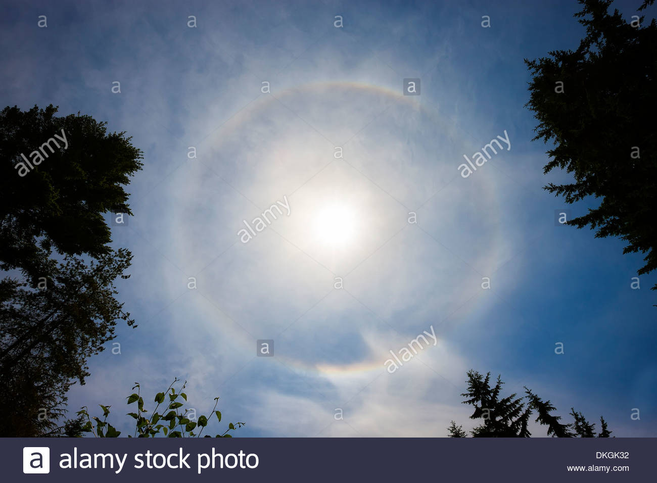 A 22° halo forms around the sun over Snohomish County, Washington. - Stock Image
