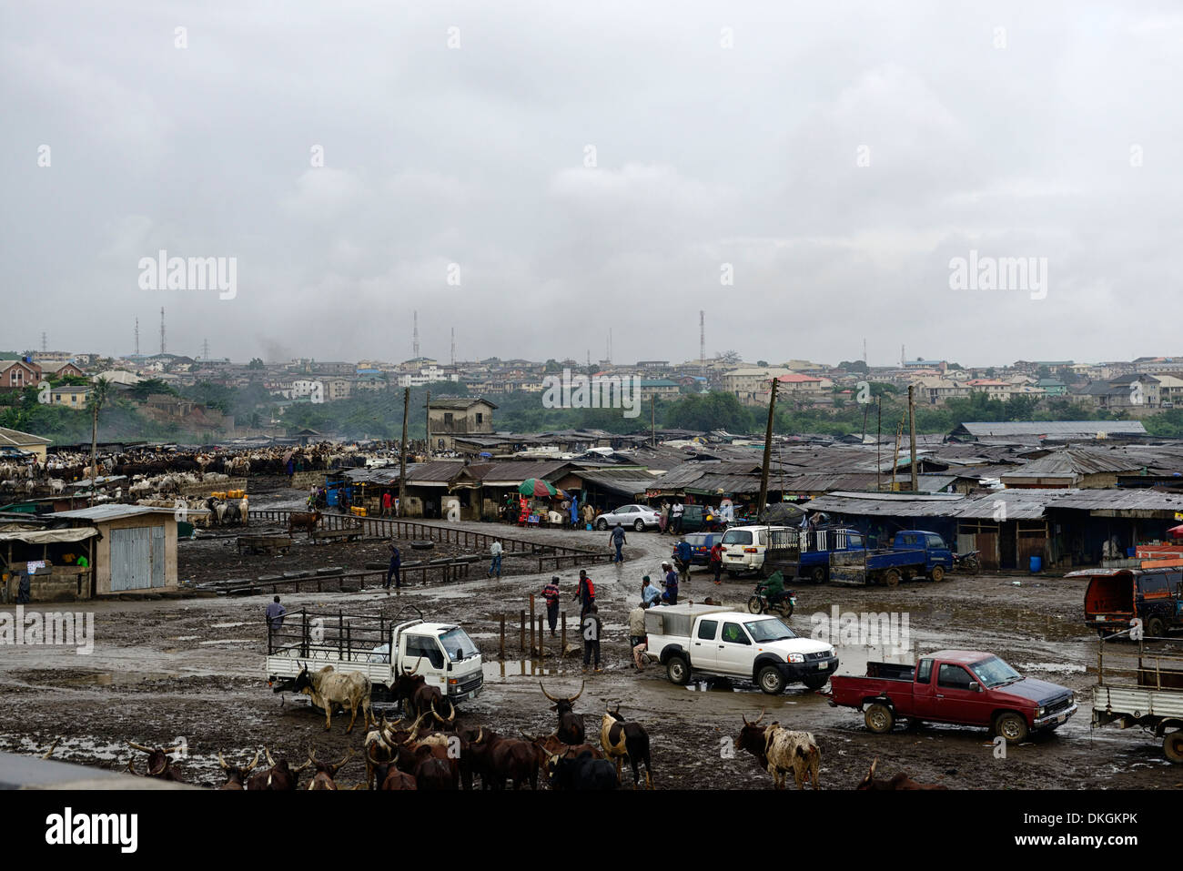 lagos cattle mart market commodity trade trading sell selling sellers crude primitive unhygienic poor standard - Stock Image
