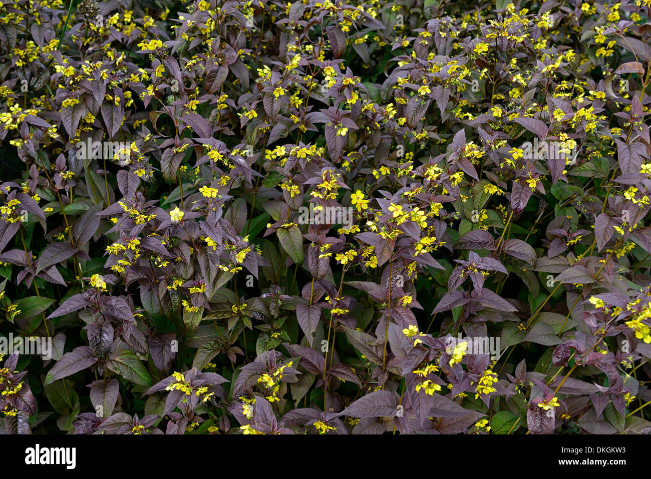 Brown Yellow Purple Leaves Stock Photos Brown Yellow Purple Leaves
