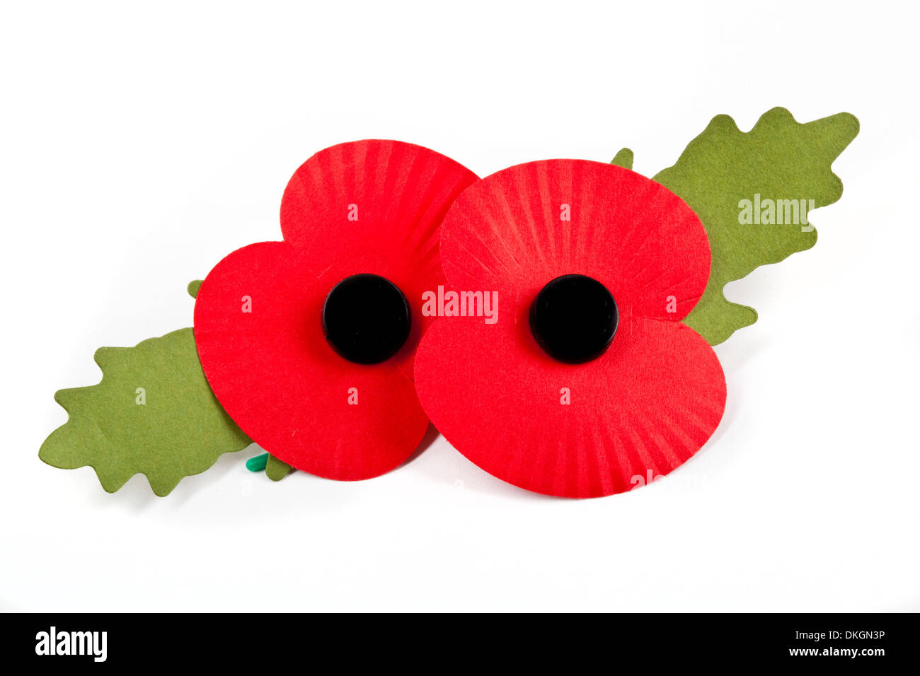 Poppies to commemorate the Commonwealth War Deaths in both World Wars. - Stock Image