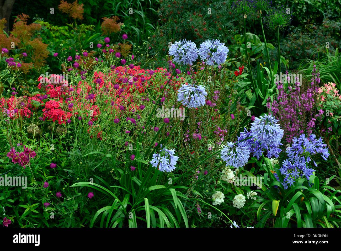 Dillon Garden Dublin Ireland perennial border contrasting flower colour garden plant combination - Stock Image